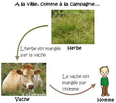 Cours De Découvrir Le Monde Les Chaînes Alimentaires Maxicourscom