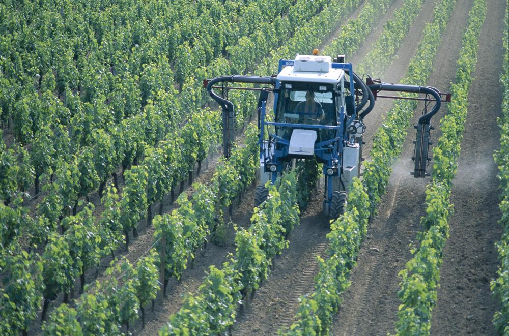 Cours de histoire g ographie la situation alimentaire mondiale - Traitement de la vigne ...
