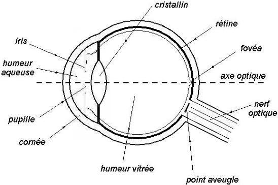 Cours de Physique-chimie - Modèle de l oeil réduit - Maxicours.com 2e83721c2f31