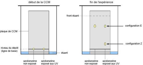 Cours de physique chimie 1re s l 39 isom risation photochimique - Chromatographie sur couche mince ...