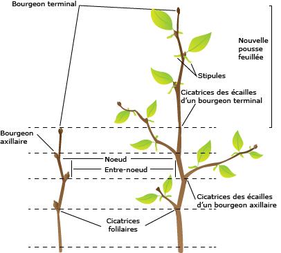 Cours De Svt Organisation Fonctionnelle D Une Plante Maxicours Com